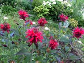 村内の庭好きの方から分けていただいた花も多い